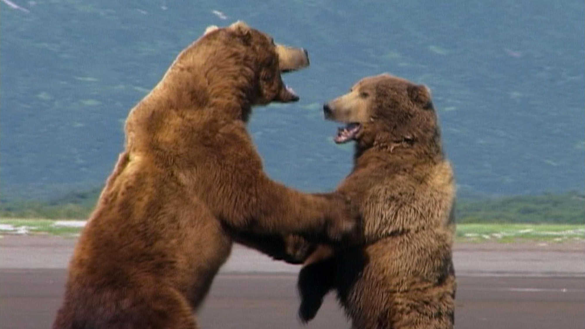 Grizzly Man (image 1)