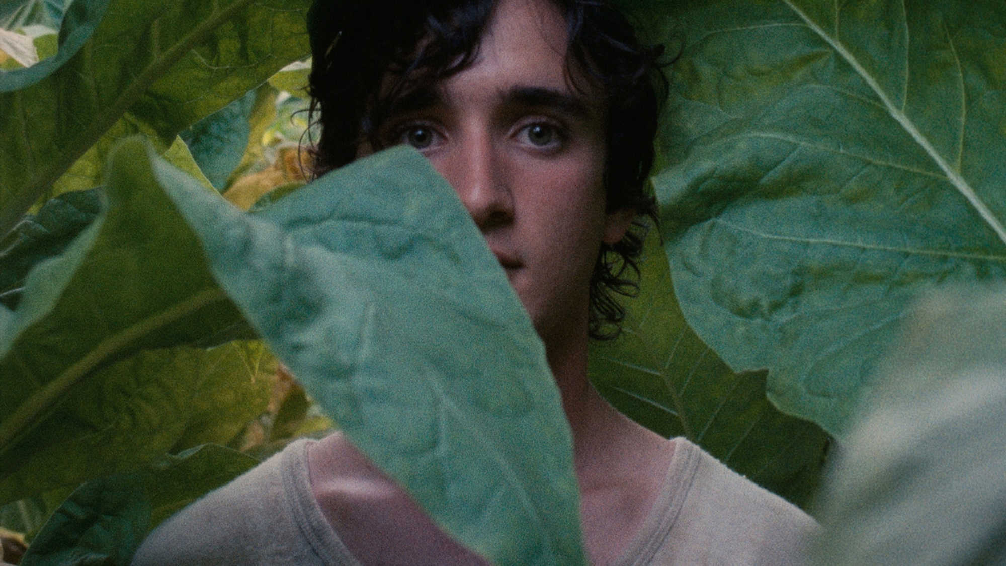 Happy As Lazzaro (image 1)