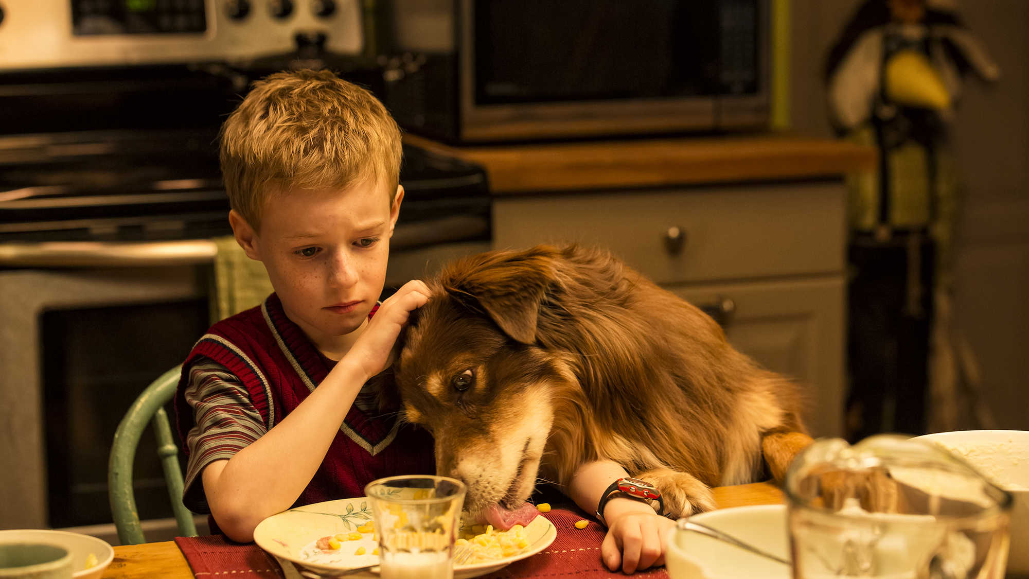 The Young and Prodigious T.S. Spivet 3D (image 16)