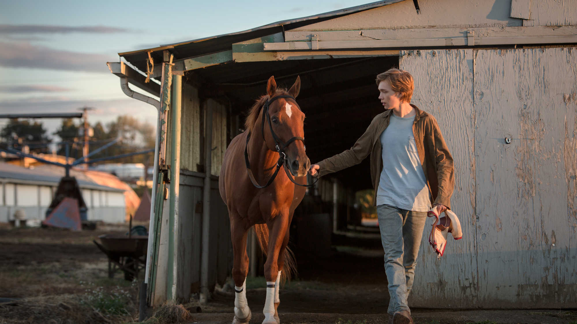 Lean on Pete (image 1)